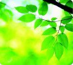 """FELLOWES Egéralátét, újrahasznosított, FELLOWES """"Earth Series™"""", levelek"""