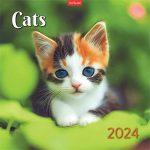 """TOPTIMER Naptár, fali, TOPIMER, """"Cats"""""""