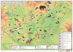"""STIEFEL Könyökalátét, kétoldalas, A3, STIEFEL """"Magyarország vadon élő állatai / Magyarország állatvilága"""""""
